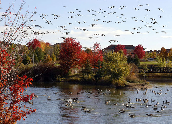摄影作品 戴慧文(北京)高5组      这两年秋天,可能是向南迁徙的大雁