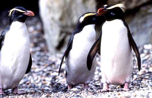 世界第八大自然奇景——新西兰美福湾(一)